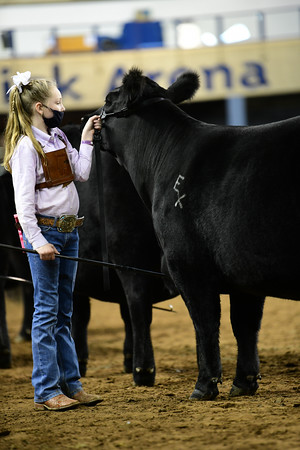 Junior Yearling Division 3