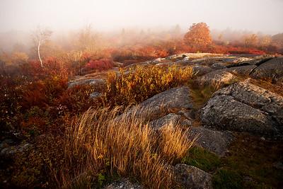 Twelve from 2016  - Landscape Retrospective