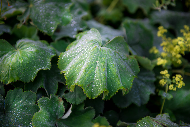 Photo of a plant in the Leduc Stone Barn Garden