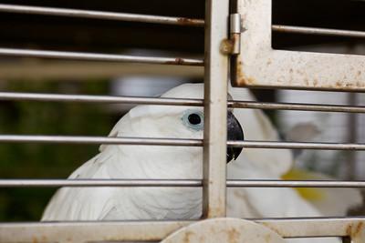 Tropical Birds, return flight - May 14th 2011