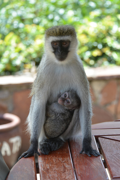 East Africa Safari 226.jpg