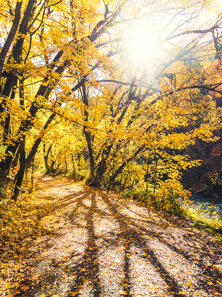 yellow-autumn-leaves-arrow-river-new-zealand.jpg