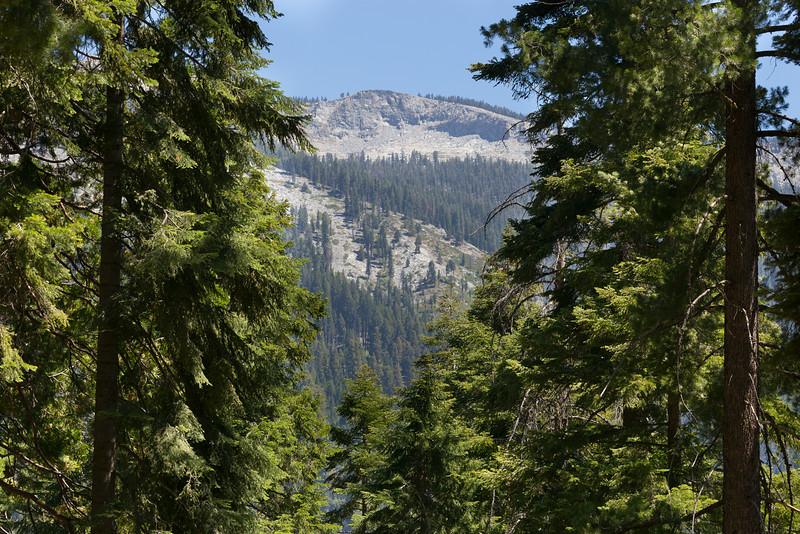Sequoia_0229.jpg
