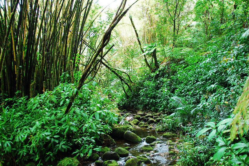 Stream in Akaka Falls State Park, Hawaii