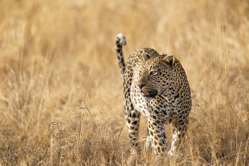 LeopardHills-20181001-3355.jpg