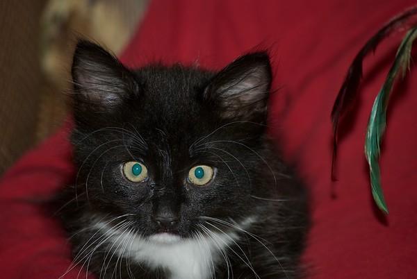 New Kitty, Tux, Fall 2017