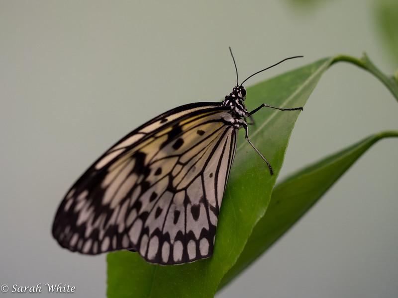 140503_ButterflyHouse_308.jpg