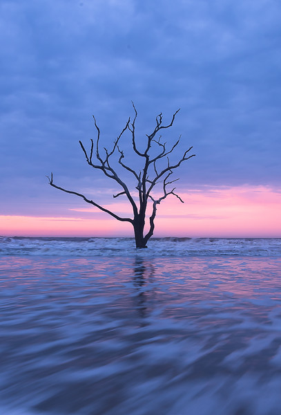 Tree at Boneyard Beach.jpg