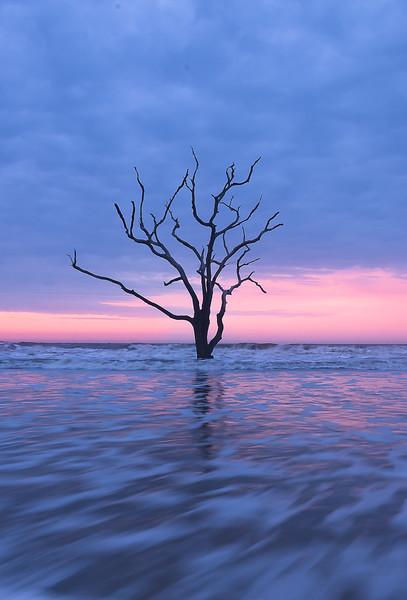 Tree at Boneyard Beach.jpg