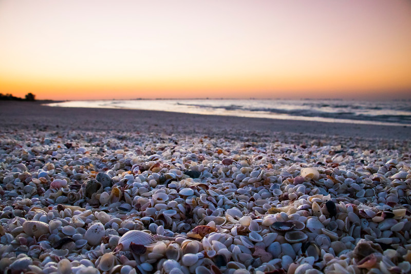 sanibel-island-shells-beach-paradise-sunrise-florida.jpg
