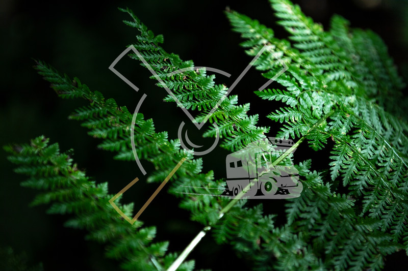 beautiful details of green vegetation and plants in the forests of the east of the Azores island of São Miguel