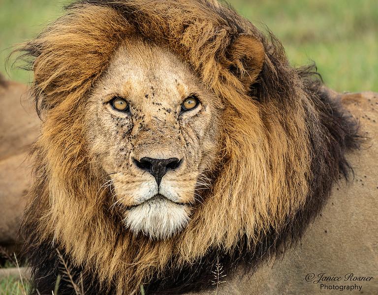 The King II