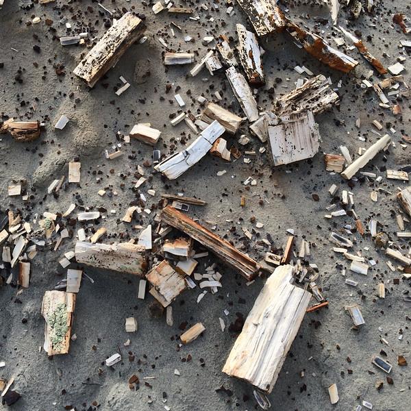 Petrified wood, Dinosaur Provincial Park, Alberta