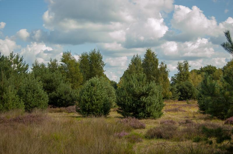 02 september 2017 Heidetocht 'De Wandelaar' te Achel & Gastel 26.jpg