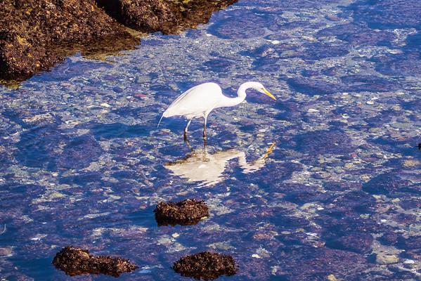 Pacific Grove & Monterey - Jan 2015