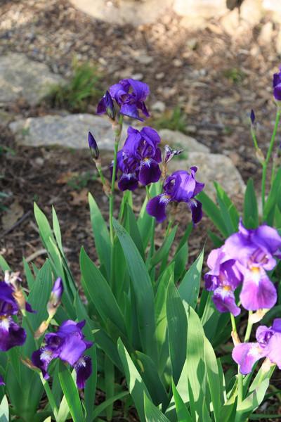 2013_05_12 Spring Flowers 002.jpg