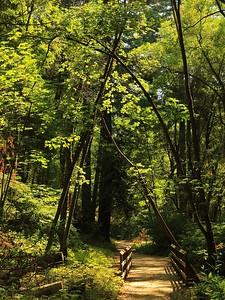 Fall Creek hike July 9th