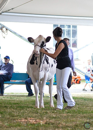 Western Fall National Holstein Show 2018