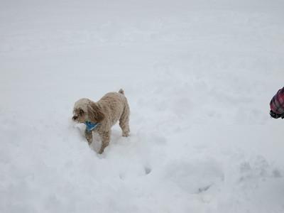 Maddie vs. Snow in Kokomo March 2015