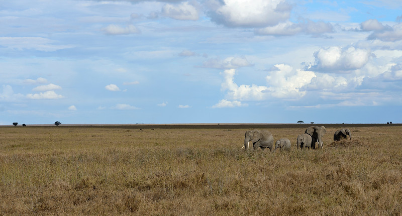 Elephants-and-Serengeti-Scape.jpg