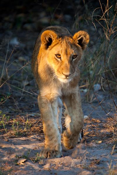 Botswana-41.jpg
