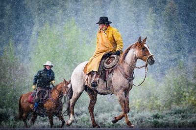 Teton Cattle Drive