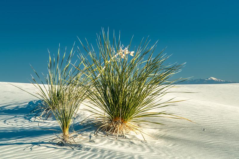 White Sands NP 2020-2.jpg