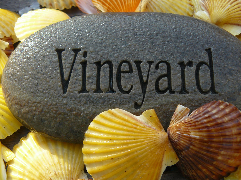Vineyard Shells.JPG