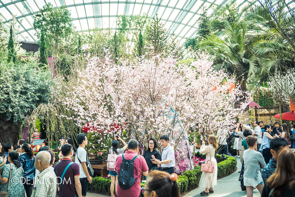Gardens by the Bay - Sakura Matsuri 2018 floral display - grand bloom giant fan