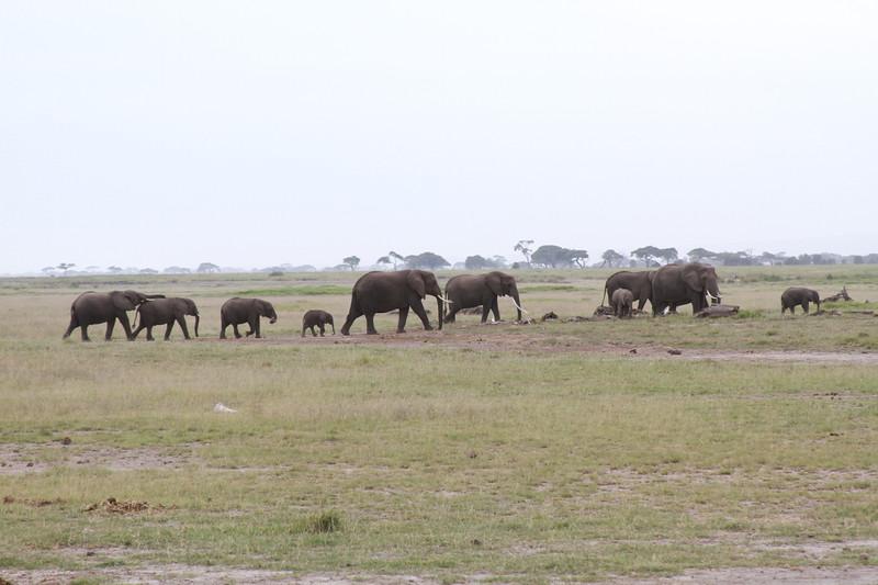 Kenya 2019 #2 326.JPG