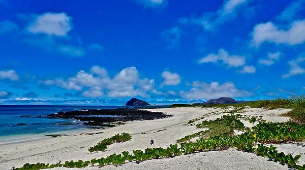 Galápagos 2012
