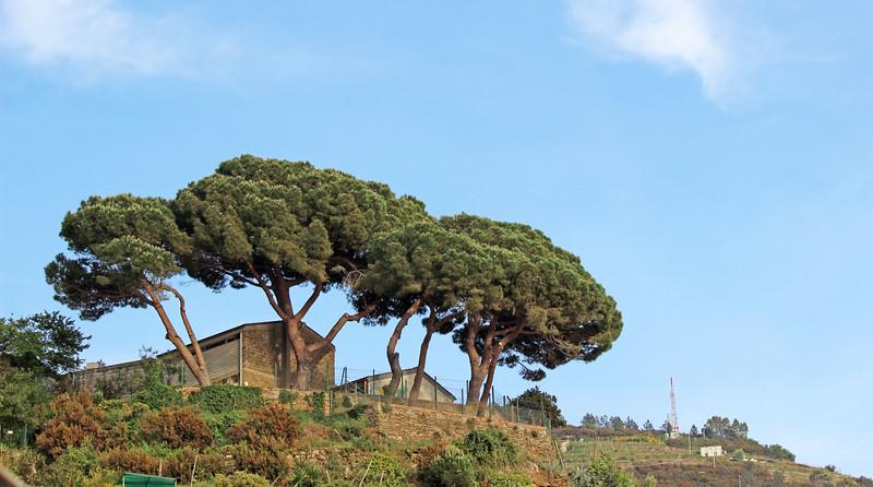 Italy-Cinque-Terre-Riomaggiore-36.JPG