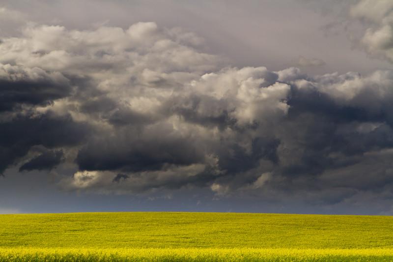 Alberta Mustard Field-110722-6636.jpg