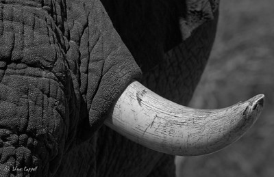 Africa: Black and White