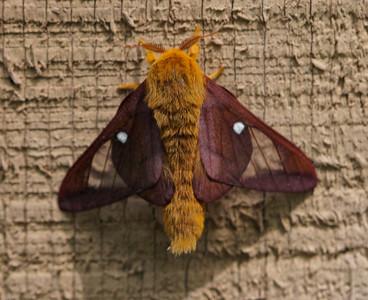 2020 Moths