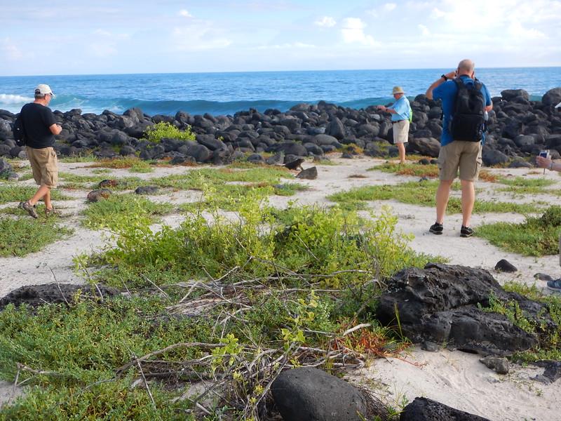 Galapagos Saint Cristobal Sea Lions & Iguanas