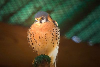 rehabilitation: birds and small animals
