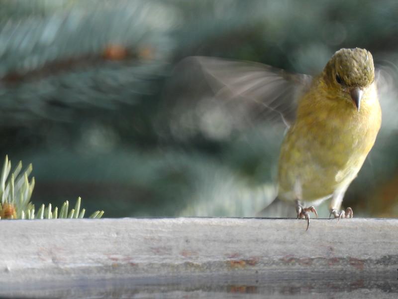 birds (143).JPG