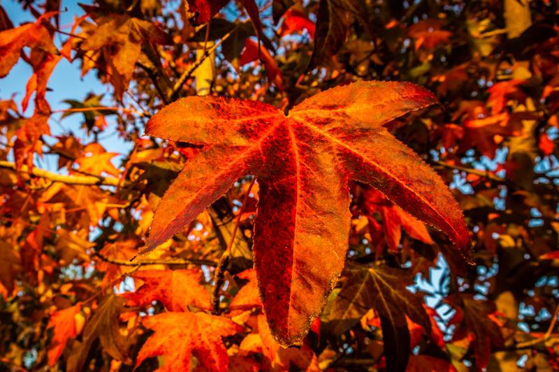 November 6 - Fall foliage.jpg