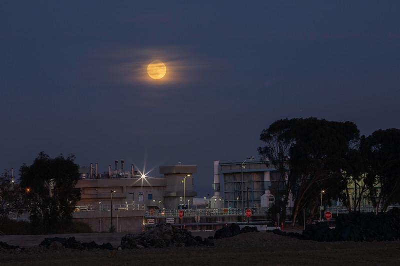 redwood_moon.jpg