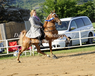 CLASS 6  FOUR YR OLD AMATEUR WALKING SPECIALTY