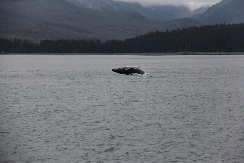 20160717-112 - WEX-Breaching Whale.JPG