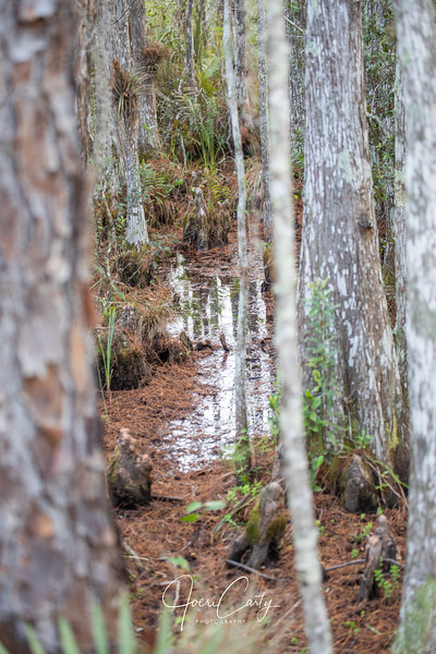 Swamp-5.jpg