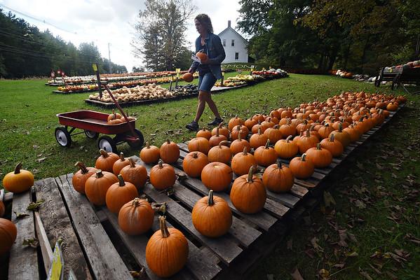 Armstrong Farm pumpkins - 091321