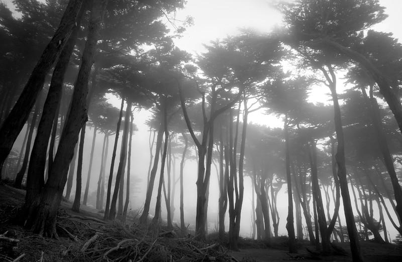 trees1L 7.5x11.jpg