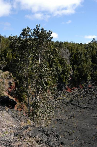 238- 20080412- Hawaii 15- Volcano Nat'l Park DSC_2995.jpg