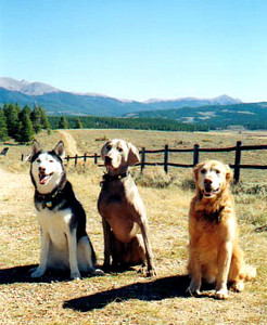 dogs_group_pic.jpg