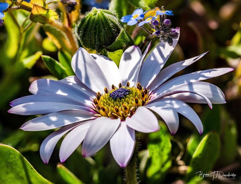 Garden Macro-2382-Edit.jpg