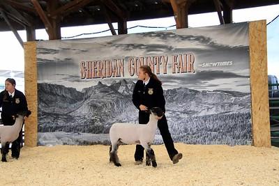 FFA Sheep Showmanship