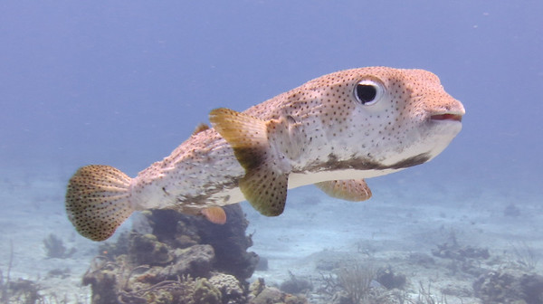 May 2013: Cozumel with NCRD & UnderseaX